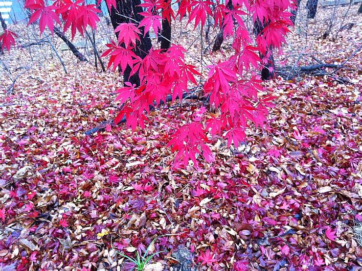 fall0100.jpg